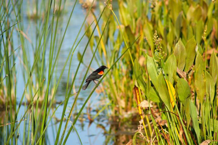 Fall workshop will visit Ohioestuary