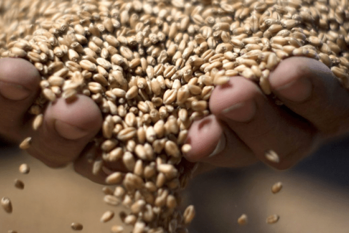 Feeding 10 billion people will require genetically modifiedfood