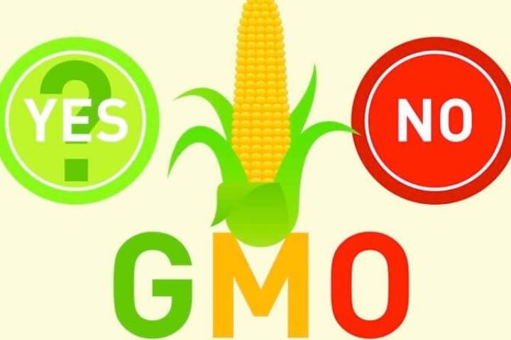 New gene-editing technique eliminates GMO 'delivery vehicle' for CRISPRcrops
