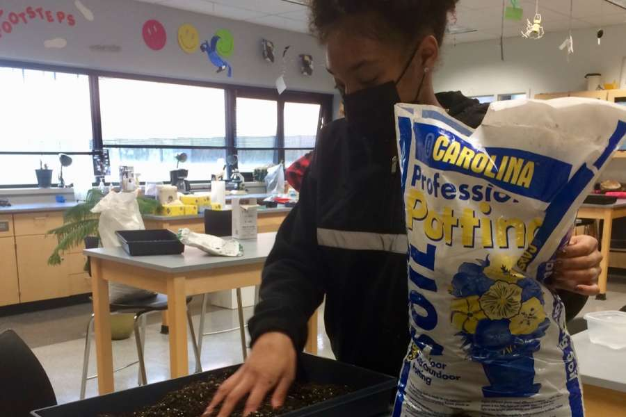 Spring planting—in theclassroom!