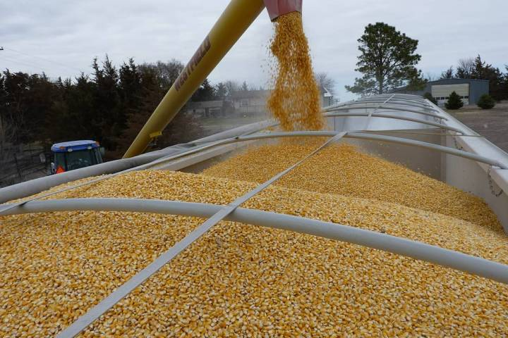 Ohio is the seventh leading producer of corn in the United States